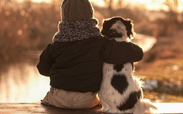 1001 thắc mắc: Tại sao chó thích được xoa bụng?