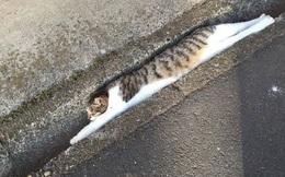 """Những bức ảnh chứng minh mèo ở dạng thể lỏng, có thể """"chảy"""" gọn vào bất kỳ nơi đâu"""