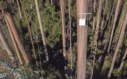 Chi-lê: Kiểm lâm lắp 'mũi kỹ thuật số' trên cây cao để ngửi được mùi khói cháy rừng