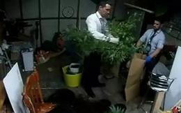 Cô bé 5 tuổi gọi điện để chơi khăm cảnh sát, vô tình làm lộ vườn cây cần sa của mẹ