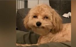 Video: Chú chó có nụ cười ngọt ngào hết phần của chó nhà người ta