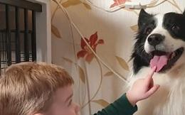 Chú bé 2 tuổi cực yêu chó và sẵn sàng làm mọi thứ với chó yêu