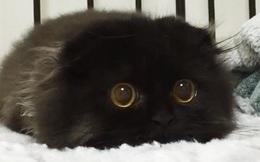 Loạt ảnh siêu dễ thương về mèo mun cho thấy chúng không phải điềm xấu như ta tưởng