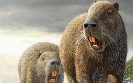 Loài chuột cổ đại lớn nhất từng tồn tại trên Trái Đất có thể đạt kích thước tương đương với một con bò tót