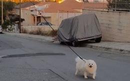 Cái khó ló cái khôn: Anh thanh niên dùng drone dắt chó đi dạo để tránh Covid-19