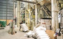 Tổng cục trưởng Tổng cục Dự trữ nhà nước: Tạm dừng xuất khẩu gạo là cần thiết