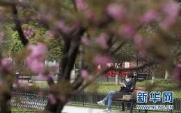 Vũ Hán: 'Mùa xuân trở lại' sau 65 ngày cửa đóng then cài vì COVID-19