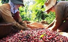 """Trong khó khăn do dịch bệnh Covid-19, ngành nông nghiệp trở thành """"trụ đỡ"""" của nền kinh tế"""