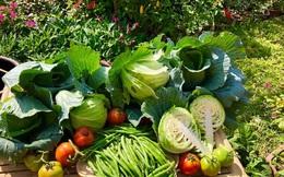 Ở nhà tránh dịch mới vài ngày, hội chị em đã bắt đầu đua nhau khoe vườn rau tại nhà sau khi được cải tạo, có nơi quả nặng trĩu cành hái ăn không kịp!