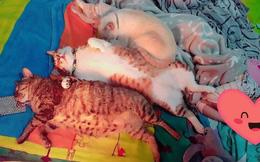 """Thấy sen được nghỉ học, """"tam ca 3 con mèo béo"""" kém miếng khó chịu, đã ngủ tranh hết nửa cái giường còn độc chiếm luôn chiếc quạt sưởi"""