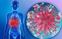 Làm gì khi virus viêm gan hoạt động trở lại?