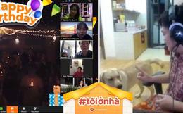 Cả công ty 100 người cùng đón sinh nhật online, dở khóc dở cười vì bị em chó chen ngang chiếm hết spotlight