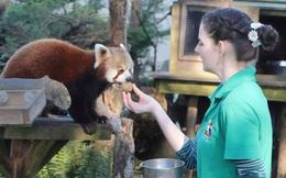 Thương động vật côi cút mùa Covid-19, nhân viên khu bảo tồn quyết ở lại cách ly cùng chúng suốt 3 tháng