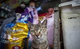 Phát hiện virus SARS-CoV-2 lây lan trong quần thể mèo Vũ Hán