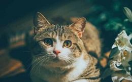 Admin group Đảo Mèo xác nhận lý do bị 'bay màu': Không kịp kiểm soát bản quyền nên bị Facebook xử phạt