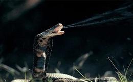 1001 thắc mắc: Loài rắn nào không có cánh mà vẫn biết bay?