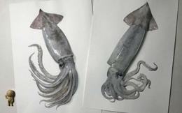 Nghệ sĩ Nhật vẽ tranh siêu thực khiến người xem cứ ngỡ như đang nhìn một con mực sống trước mặt