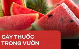 Món ăn giải khát vào mùa hè này còn là thuốc chữa bệnh cực hay trong Đông y