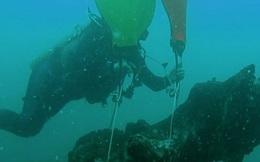 Khu rừng 60.000 năm tuổi nguyên vẹn dưới đáy biển