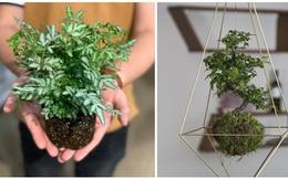"""Ở nhà làm gì: Chị em mạnh tay thử sức với kiểu chơi cây bonsai dân dã của người Nhật, đảm bảo đơn giản nhưng giúp nhà đẹp """"bật tông"""""""