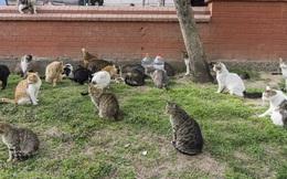 Video: Thành phố có hàng triệu con mèo lang thang trên phố