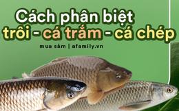 Gợi ý giúp bạn: Cách phân biệt được đâu là cá chép, cá trắm, cá trôi và cách chọn cá ngon chuẩn