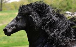 """Gặp gỡ """"ngựa tóc dài"""" đẹp trai lãng tử nhất thế giới"""