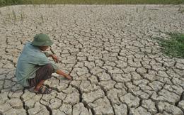 Hơn 515 tỷ đồng hỗ trợ các địa phương bị hạn hán, xâm mặn