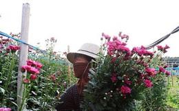 Làng hoa lớn nhất Hà Nội ủ rũ vì dịch Covid-19