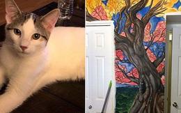 Con mèo nghịch ngợm cào xước tường nhưng không ngờ lại giúp chủ nhân phát hiện điều kinh ngạc được giấu kín trong nhà mình