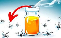 8 loại hương hoa có thể giúp diệt và xua đuổi muỗi trong nhà thích hợp cho chị em dùng vào những ngày hè