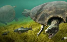 Phát hiện loài rùa cổ đại lớn nhất từng tồn tại trên Trái Đất