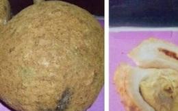 Kì lạ quả sầu riêng không gai hiếm hoi được tìm thấy cách đây 13 năm và không phải ai cũng có thể trồng được