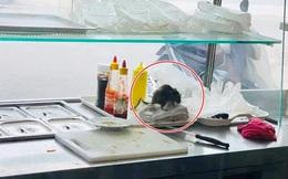 Thực khách hốt hoảng khi nhìn thấy chú chuột to đùng vô tư bò trên kệ làm bánh mì ở một cửa hàng nổi tiếng của Hà Nội