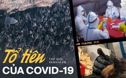 Chuyện về 'biệt đội săn dơi': Những người liều mạng với virus chết chóc nhất bậc nhất, phát hiện 'tổ tiên' của Covid-19 từ nhiều năm trước