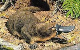 1001 thắc mắc: Loài động vật có vú nào không sinh con mà lại đẻ trứng