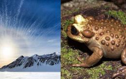 Giới khoa học sửng sốt khi phát hiện hóa thạch ếch Nam Mỹ tại Nam Cực