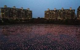 Hồ nước ở Ấn Độ bất ngờ sáng rực sắc hồng do hàng nghìn con chim Hồng Hạc tụ hội trong thời điểm vắng người do dịch bệnh