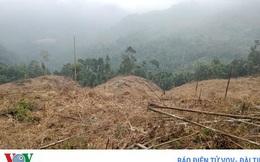 Khởi tố 10 đối tượng phá rừng ở Lào Cai
