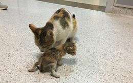 Ấm lòng hình ảnh mèo mẹ 'bế' mèo con tới bệnh viện để khám bệnh, được các bác sĩ nhiệt tình giúp đỡ