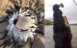 Những bức ảnh kinh dị có thật 100% cho thấy thiên nhiên ở Australia thật đáng sợ, người có 'thần kinh thép' cũng phải rùng mình