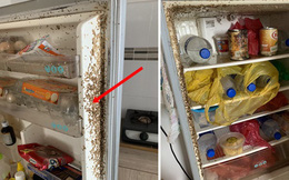 Sau 2 tháng về quê tránh dịch, sinh viên trở lại nhà trọ, bủn rủn chân tay khi phát hiện thứ gì đang lúc nhúc trên cửa tủ lạnh
