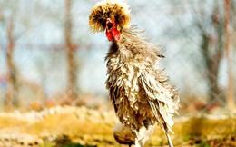 """Cảnh sát Mỹ phát lệnh truy nã """"con gà hung hăng"""" chuyên khủng bố người dân tại cây ATM"""