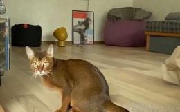 """Video: Chết cười chú mèo mê mẩn trò """"nổ bong bóng"""""""