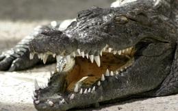 1001 thắc mắc: Loài động vật nào có lực cắn kinh hoàng nhất thế giới?