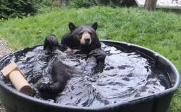 Video: Chú gấu đen thỏa thích vùng vẫy trong chậu tắm như em bé