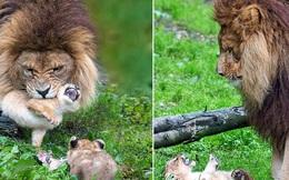 Làm cha khó lắm: Mẹ vắng nhà, sư tử bố bất lực trước lũ con nghịch như quỷ khiến dân mạng vừa buồn cười vừa thương
