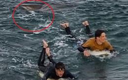 Thanh niên thực hiện hành động khó tin khi bị cá mập cắn, thoát chết thần kỳ trong lần trải nghiệm lướt sóng ở Australia