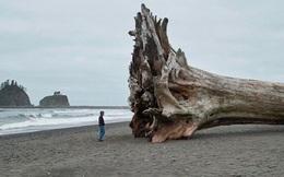 20 vật thể có kích thước khổng lồ khiến loài người trông vô cùng tí hon khi đứng cạnh