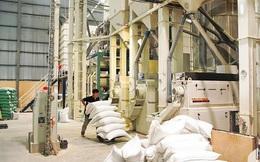 Doanh nghiệp xù hợp đồng gạo dự trữ quốc gia tiếp tục đi đấu thầu